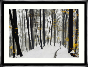 Picture of A Winters Walk - L6A