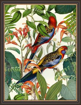 Picture of Exotic Jungle Birds SE - MP60